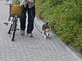 Beagle sighting (2683540832).jpg