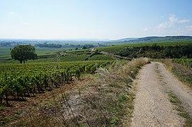 Beaune.- les vignobles de la côte de Beaune (28).JPG