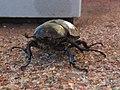 Beetle in Pine AZ.jpg