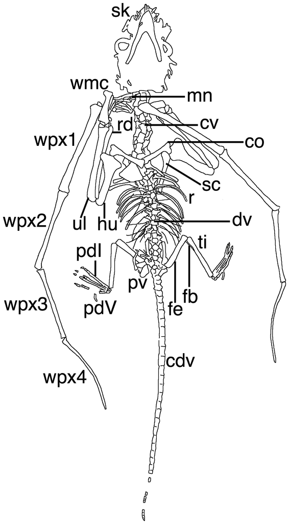 file bellubrunnus diagram png