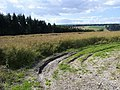 Benges Wood - geograph.org.uk - 952508.jpg