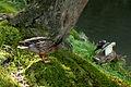 Bird - Flickr - nekonomania (1).jpg