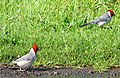Bird kauai.JPG