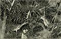 Bird notes (1922) (14568939780).jpg