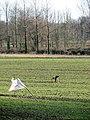 Bird scarers in cereal crop - geograph.org.uk - 1127128.jpg