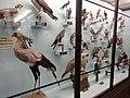 Birds at naturhistorisches.JPG