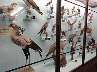 Natural History Museum, Vienna - Image: Birds at naturhistorisches