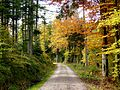 Black Forest- Road (10561950824).jpg