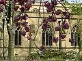 Blossom at Dewsbury Minster - geograph.org.uk - 361781.jpg