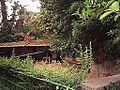 Boar - Zoo Barcelona - panoramio.jpg