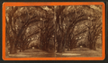 Bonaventure Cemetery, Savannah, from Robert N. Dennis collection of stereoscopic views.png