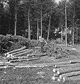 Bosbewerking, arbeiders, boomstammen, takken, Bestanddeelnr 253-5937.jpg