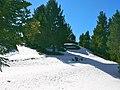 Bosc nevat a la Cerdanya - panoramio.jpg