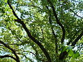 BotanicGardensPisa (80).JPG