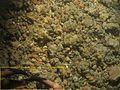 Brachyura WBRF CEND0313 ADDGT32 STN 260 A1 006.jpg