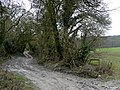Bridleway up Bury Hill - geograph.org.uk - 672382.jpg