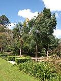 Brisbane City Botanic Gardens (14).jpg