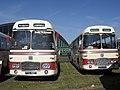 Bristol Greyhound coaches 2150 (FHW 156D) & 2148 (FHW 154D), Showbus rally 2009.jpg