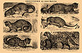 Brockhaus and Efron Encyclopedic Dictionary b36 528-0.jpg