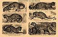 Brockhaus and Efron Encyclopedic Dictionary b36 528-0.jpg