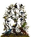 Buisson d'oiseaux exotiques.jpg