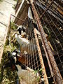 BulacanAgriculturalStateCollegejf6062 05.JPG