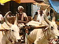 Bullock Cart and Driver - Kumbakonam - India.JPG
