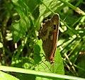 Butterfly (27839169813).jpg
