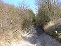 Byway to Hackhurst Downs - geograph.org.uk - 668278.jpg