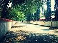 CAPE Campus Road.jpg