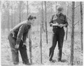 CCC boys surveying thinning area, Black Hills National Forest, South Dakota - NARA - 195841.tif