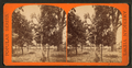 Cactus tree, from Robert N. Dennis collection of stereoscopic views.png