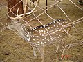 Caged deer.jpg