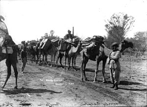 Bourke, New South Wales - A Camel caravan in Bourke circa 1900