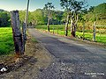 Caminito, caminito... ¿hacia donde vas^ - Hatillo, Puerto Rico - panoramio.jpg
