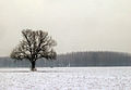 Campo in neve - Basiglio 01-2006 - panoramio.jpg