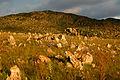 Campos Rupestres da Serra da Canastra.jpg