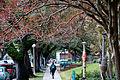 Campus (8228398944).jpg
