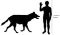 Canis dirus size.png
