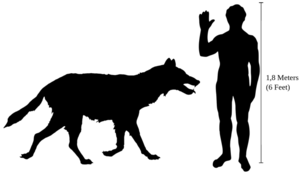 Dire wolf coming up to human waist height, about as long as a human is in height