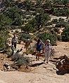 Canyonlands 8-14 (15297162579).jpg