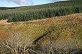 Capelfoot Forest - geograph.org.uk - 1034130.jpg