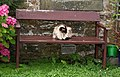 Cat, Boarhills - geograph.org.uk - 956255.jpg