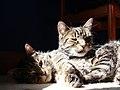 Cat Hydra (3730275772).jpg