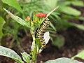 Caterpillar (9110110663).jpg