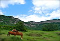 Cavalls al Collsacabra.JPG
