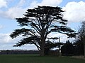 Cedar Tree - geograph.org.uk - 357262.jpg