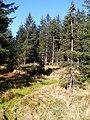 Cestou na Smrk - panoramio (10).jpg