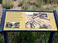 Chacoan Stairway - Chaco Culture National Historical Park, New Mexico, USA - panoramio.jpg