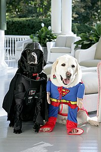 Cheney's dogs dressed for halloween.jpg